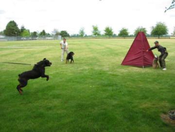 Perth Dog Training