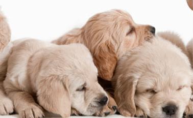 Puppy Training Perth