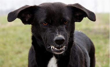 Aggressive Dog Training Perth